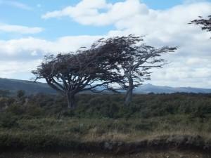 patagonia4s